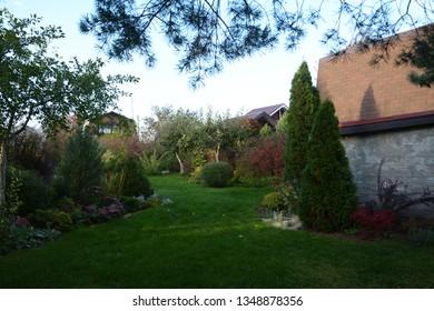 White Cedar Tree (Thuja occidentalis 'Smaragd') in a small garden. Two Arborvitae Emerald as an accent in the garden design.