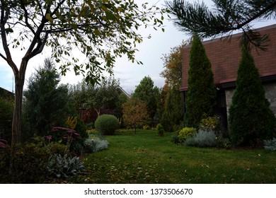 White Cedar Tree (Thuja occidentalis 'Smaragd') in a small garden. Two Arborvitae Emerald as an accent in the garden design. A cloudy autumn evening