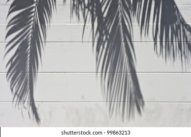 White cement wall with a shade from palm trees