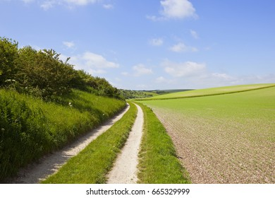 a white chalky curving farm track beside a hillside pea field in the yorkshire wolds under a blue cloudy sky in summer