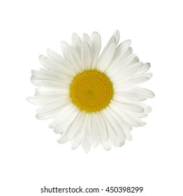 White chamomile, isolated on white