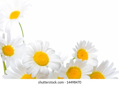 white chamomiles with white background, copy space for the text