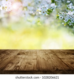 White cherry blossoms in garden with empty wooden table and spring sun for a decoration