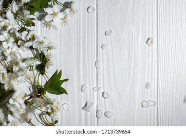 White cherry flowers on white wooden background Spring mood and tenderness of white flowers on a branch