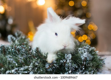 White Christmas rabbit.