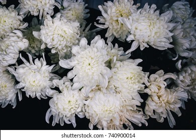 White Chrysanthemum in Bouquet Close-Up on Dark Shadow Background as Buddhist Offerings in Asia
