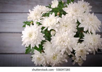 White Chrysanthemum in flower pot on grey wooden backround, horizontal