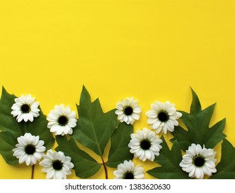 White chrysanthemum flowers on yellow background. Background for congratulations and postcards.