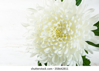 White chrysanthemum on whitewooden planks. Mother's day greetings. Birthday congratulations. Selective focus. copy space for message. Postcard. Birthday card. Birthday background