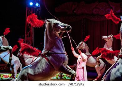 White circus horses on black background