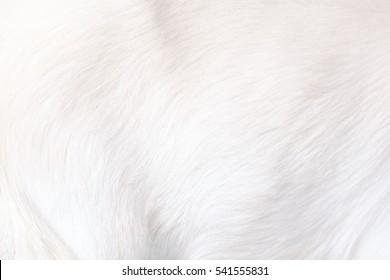 White Clean Soft Fluffy Animal Fur