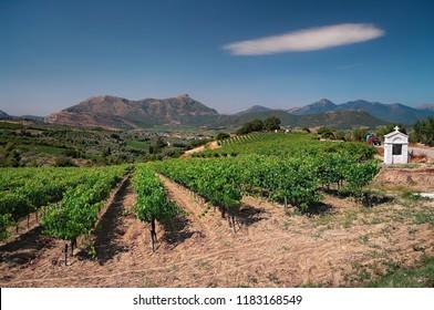 white cloud over vineyard in Nemea Wine Roads, Greece