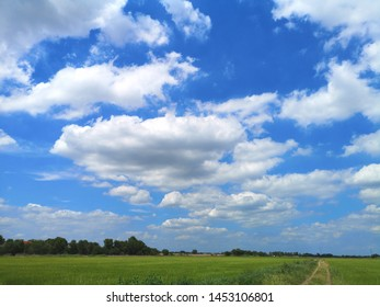 white clouds in the blue sky natural background nature rice tree grassy lush verdancy verdant verdantly verdure verdurous verdurousness greenery greenish viridity Green fields grass green manicured