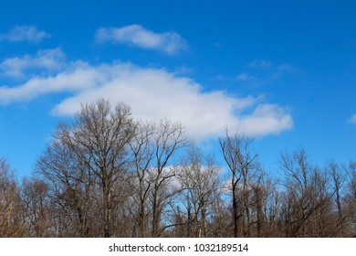 The white clouds in the blue sky over the treetops of the forest.