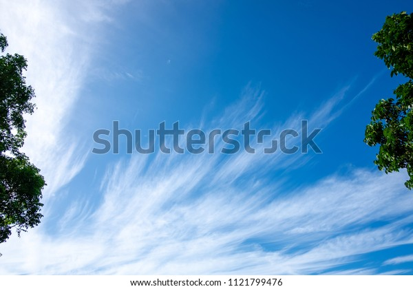 White clouds (Cirrostratus) and blue sky with green trees. Copy space background.