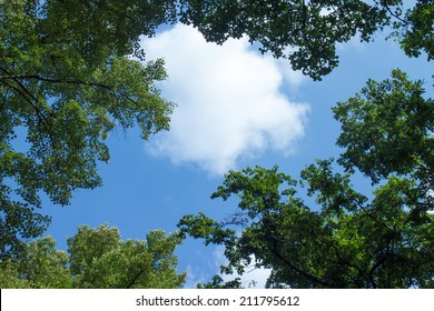 White clouds surrounded by luxuriant trees against a beautiful clear sky