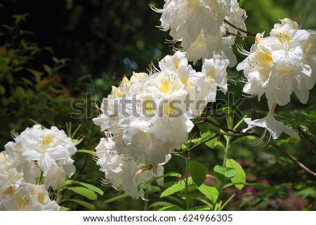 White Cluster Flowers Stock Photo Edit Now 624966305 Shutterstock