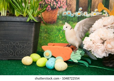 White collared dove landing among colored Easter eggs and spring flowers