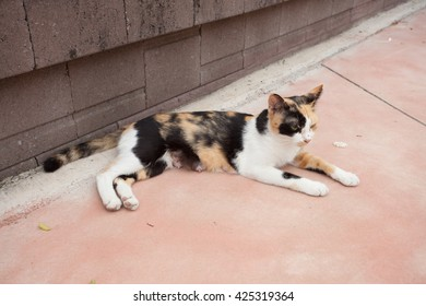 white color cat thai nature, Local cat on the street, Bangkok, Thailand. Mother Lost Kitten.