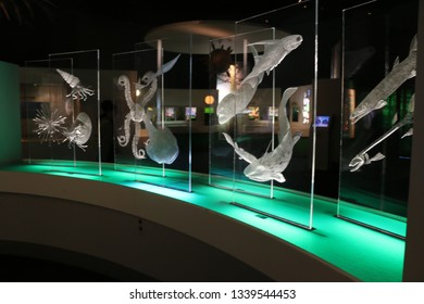 White colour ocean organisms in national museum of natural sciences, Taichung, Taiwan-25/September/2016.