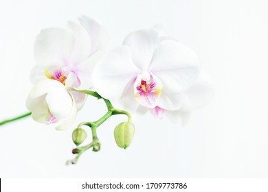 White composition with branch of orchid, tender floral light image