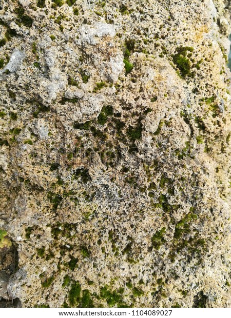 The white coral with moss