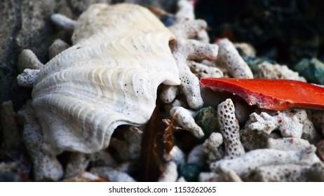 white corals at beach in Sabang, Puerto Galera, Oriental Mindoro, Philippines