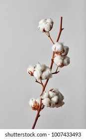 white cotton flowers on gray background