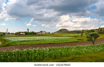 White country houses with opium poppies  fields in Phrygia Valley Natural Park (Frig Vadisi Tabiat Parki), Ihsaniye, Afyonkarahisar/Turkey
