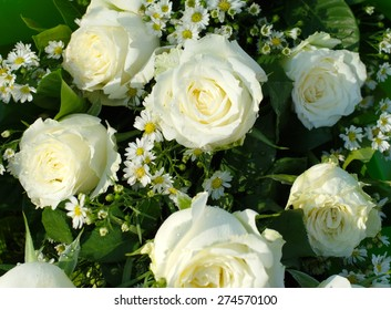 white cream roses flower