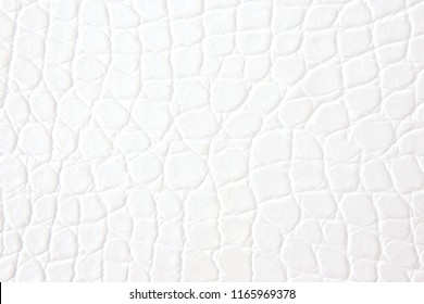 White crocodile leather background