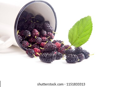 White cup with fresh sweet black mulberry berries and green leaf of mulberry tree isolated on white