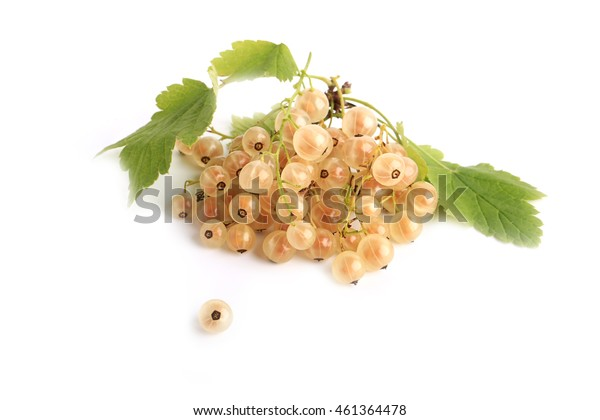 White currant on a white background top view