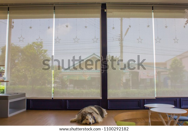 White Curtain Blinds Roller Sun Protection Stock Photo Edit