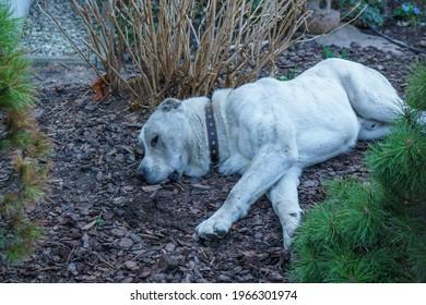 White cute dog sleeps on ground