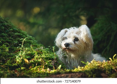 White cute old mixed breed dog in forest