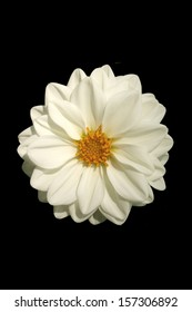 White Dahlia - This photograph can used to create various sizes of matted prints and all occasion handcrafted floral note cards to provide images to enhance your thoughts...