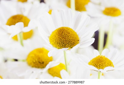 White daisies in bunch, horizontal image, focus on center