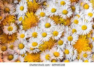 white daisies and dandelions on grey background