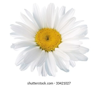 White daisies on white background