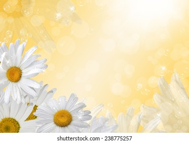 White daisies on a sunny background. Space for text.