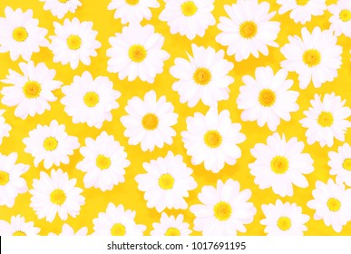 White daisies on yellow background flat lay top view - Spring time concept with  flowers  compositionon on pastel cardboard