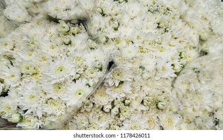 White Daisies symbolize innocence and purity are in bouquet