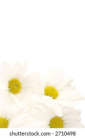 white  daisy background or border for greeting card