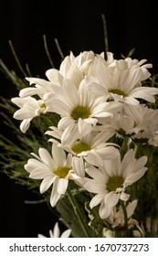 white daisy bouquet against black background