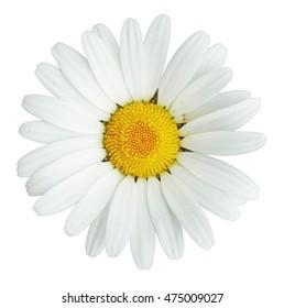 White Daisy Clip Art