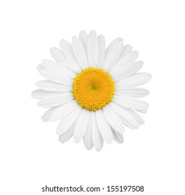 White daisy close-up isolated on white background