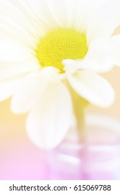 A white daisy flower with a yellow center and a pink and beige background in a vertical presentation.