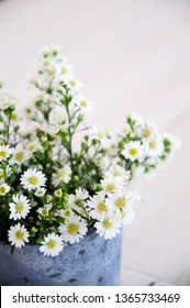 White Daisy flowers in pot, beautiful small decor plant.