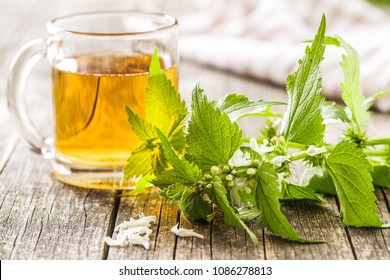 White dead nettle and nettle tea.